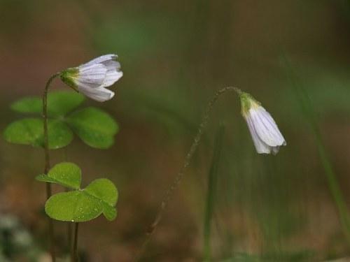 blommor_1_090521