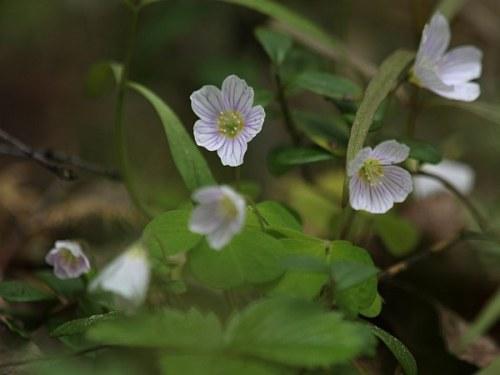 blommor_3_090521