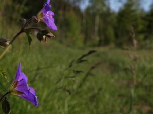 blommor_efter_vagen_090609