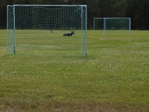 fotball_renar