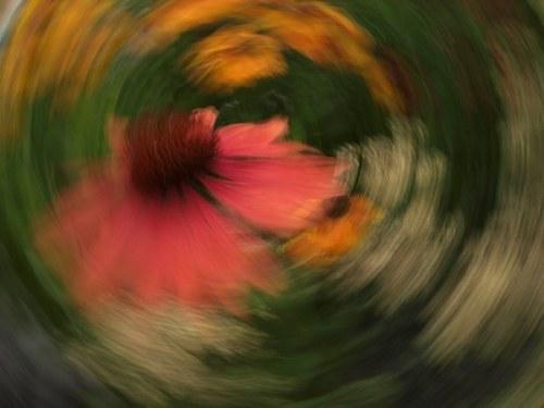 blomsnurr_bolognerskogen