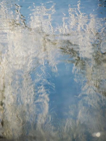 frosty_birch_reflection