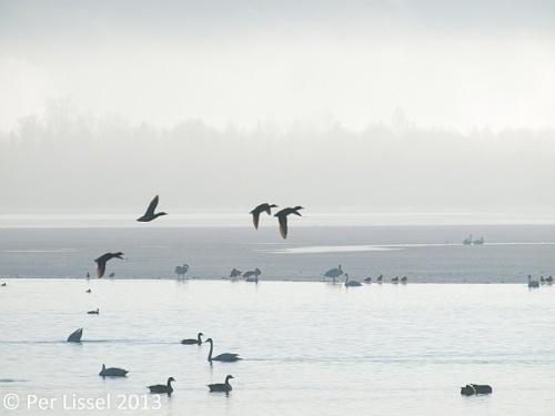 birds_hovran
