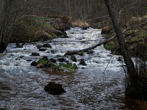 norddalen_3_vitsippor