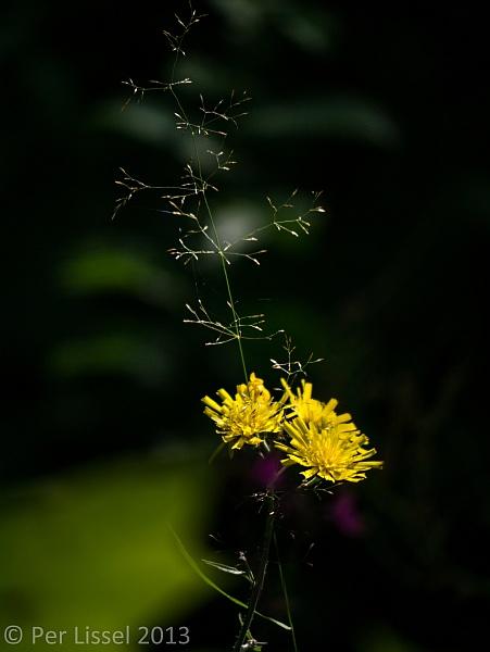 kis2013_blomma01_600px