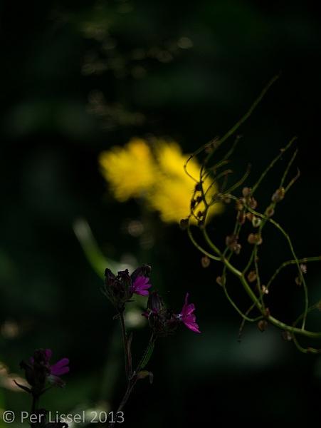 kis2013_blomma02_600px