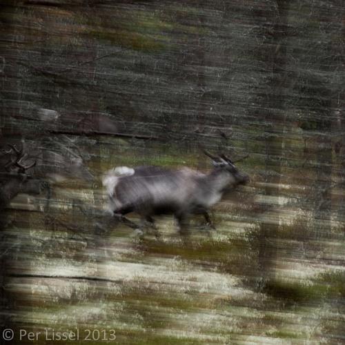 running_reindeer