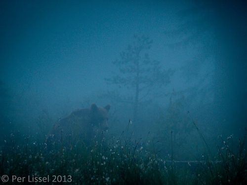 bjorn_001_vargas_20130627