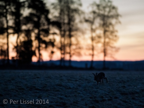 morning_hare_01_20140405