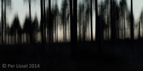 malingsbo_skogsskyline_20140808