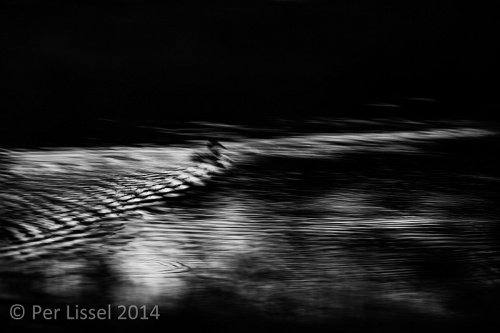 night_at_the_pond_bw_20140915