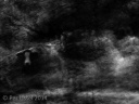 1the_cow_kloster_bw_20141007