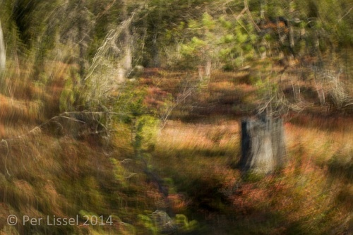 stump_abstract_skarvallen_20140927