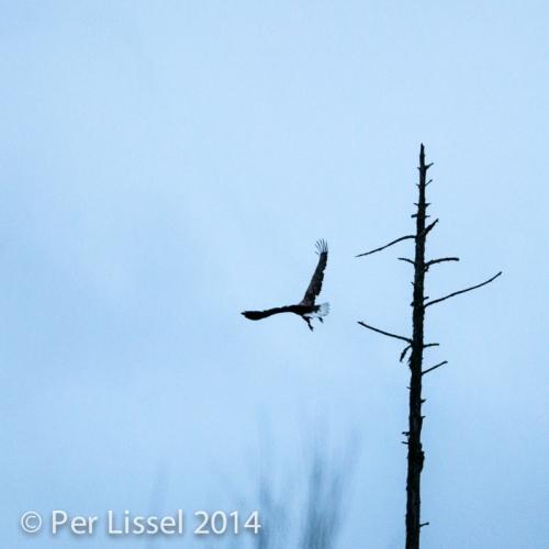 eagle_3_20141115