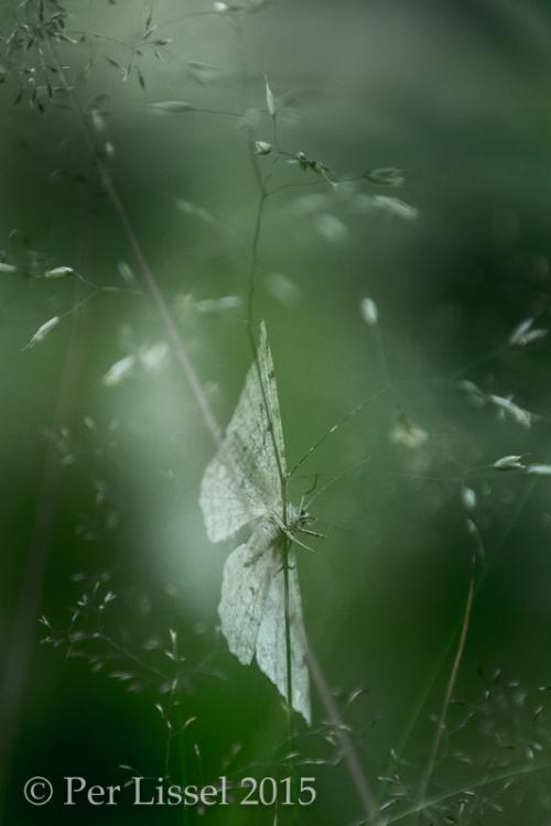 5__butterfly_4284_20150811